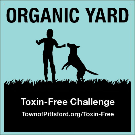 Toxin Free Challenge