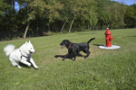 Pittsford Town Dog Park Grand Opening